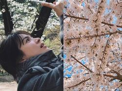Sao Hàn 3/4: Song Hye Kyo cùng ông xã đi ngắm hoa anh đào