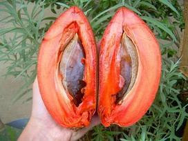 Hồng xiêm ruột đỏ khủng 2kg/quả độc lạ thế nào mà gây sốt ở Thủ đô?
