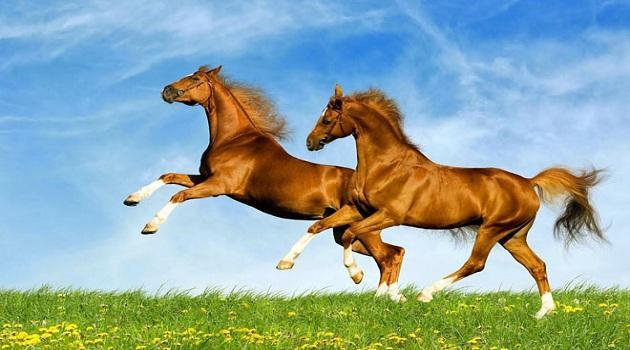 Góc khuất 12 con giáp: Người tuổi Ngựa nóng nảy, cố chấp