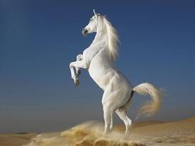 GÓC KHUẤT 12 CON GIÁP: Những con ngựa bất kham, cả thèm chóng chán