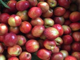 Đào trơn Trung Quốc bắt đầu 'tấn công' vào thị trường hoa quả Việt