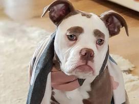 Cô chó nổi tiếng khắp thế giới vì gương mặt 'buồn man mác'