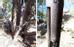 Súng trường Winchester dựa vào thân cây: Cuối năm 2014, một nhóm khảo cổ học ở Nevada, Mỹ phát hiện một cây súng trường 132 năm tuổi dựa vào thân cây trong vương quốc gia Great Basin. Theo người phát ngôn của công viên, cây súng này đã bị bỏ lại từ rất lâu  vì màu gỗ của cây súng đã hòa trộn với màu xám của thân cây. Mẫu súng này được sản xuất năm 1873, phổ biến vào đầu thế kỷ 20 ở miền Tây nước Mỹ. Lí do vì sao không ai chạm vào cây súng suốt 100 năm qua?