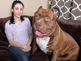 Vợ nói xấu chồng với chó