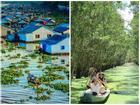 Đến An Giang dạo rừng tràm, tham quan làng nổi, chợ Châu Đốc