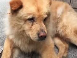 CHUYỆN LẠ: Chú chó già ngày nào cũng đợi chủ ở ga tàu 12 tiếng gây sốt mạng xã hội