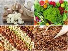 Các loại thực phẩm quen thuộc phòng ngừa ung thư cực hiệu quả