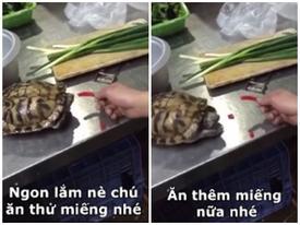 Clip hài: Chú rùa 'lao như tên bắn' khi ăn phải ớt