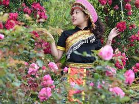 Ngắm hoa hồng nở rộ tại Sun World Fansipan vào kỳ nghỉ hè