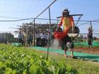 Nữ du khách xinh đẹp thích thú với vườn rau xanh hút mắt ở Hội An