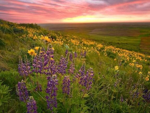 Lạc lối giữa những thung lũng hoa đẹp nhất thế giới, tha hồ sống ảo