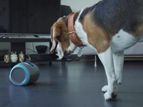 Robot Laika chăm sóc thú cưng khi chủ vắng nhà