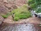 Tìm thấy thi thể nghi của phượt thủ mất tích ở Tà Năng - Phan Dũng