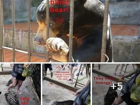 Khu du lịch tại Đà Lạt bị tố cáo ngược đãi động vật