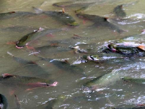 Những bí ẩn kinh dị về cặp 'cá ma' khổng lồ thoắt ẩn thoắt hiện trong hang đá Thanh Hóa