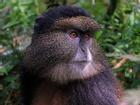 Dùng nhận diện khuôn mặt cứu… động vật khỏi tuyệt chủng