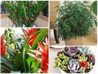 12 con giáp nên trồng cây gì trong nhà để hút tài lộc, tiền bạc?