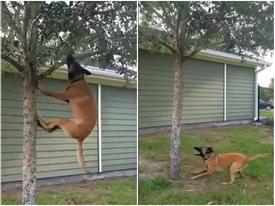 Clip: Bài luyện tập cơ hàm độc đáo dành cho các chú chó