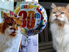 Dân mạng chúc mừng sinh nhật tuổi 30 của chú mèo già nhất thế giới