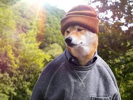 Chú chó sở hữu thần thái đỉnh cao, lĩnh lương 300 triệu VNĐ mỗi tháng nhờ làm mẫu ảnh