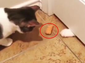 Mèo troll nhau: Khi không con nào chịu nhường con nào