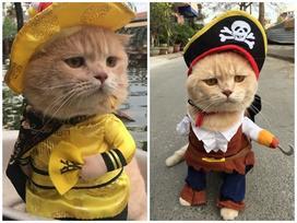 Mèo 'hoàng thượng', chó bán vé số và loạt thú cưng nổi tiếng ở Việt Nam