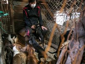Kinh dị clip chân thực về quá trình nuôi chó lấy thịt và lời chia sẻ của chủ trại: 'Tôi vô cùng day dứt mỗi khi bán chó'