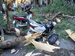 Gió quật ngã cây xanh ở Công trường Mê Linh, đè bị thương 2 người-6