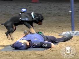 Dân mạng 'ngả mũ' với chú chó biết hô hấp nhân tạo