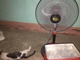 Bi hài chuyện tránh nắng nóng hơn 40 độ, thanh niên mang cả quạt và ghế vào nhà tắm nằm