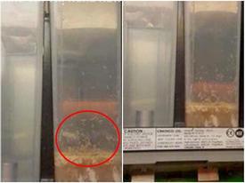 Quản lý Lotte Cinema lên tiếng vụ nhân viên để máy bán sữa có giòi
