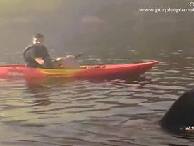 Hãi hùng cảnh cá mập khổng lồ bơi quanh người chèo thuyền