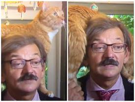 Chú mèo bất ngờ nổi tiếng khi chiếm sóng truyền hình trực tiếp