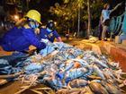 Hàng trăm công nhân thức trắng đêm vớt xác cá hồ Tây