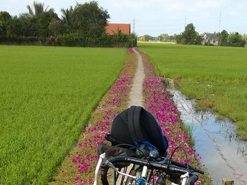 Ngắm nhìn con đường hoa mười giờ đẹp nhất Miền Tây