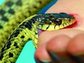 Giải mộng: Nằm mơ bị rắn cắn báo hiệu điều gì?