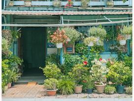 Thực hư nhà 'đẹp như tranh' ở An Giang bị trộm cây sau khi gây sốt