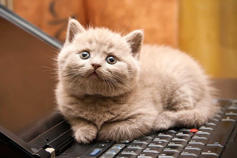 Giải mộng: Nằm mơ thấy mèo báo hiệu điều gì?-2