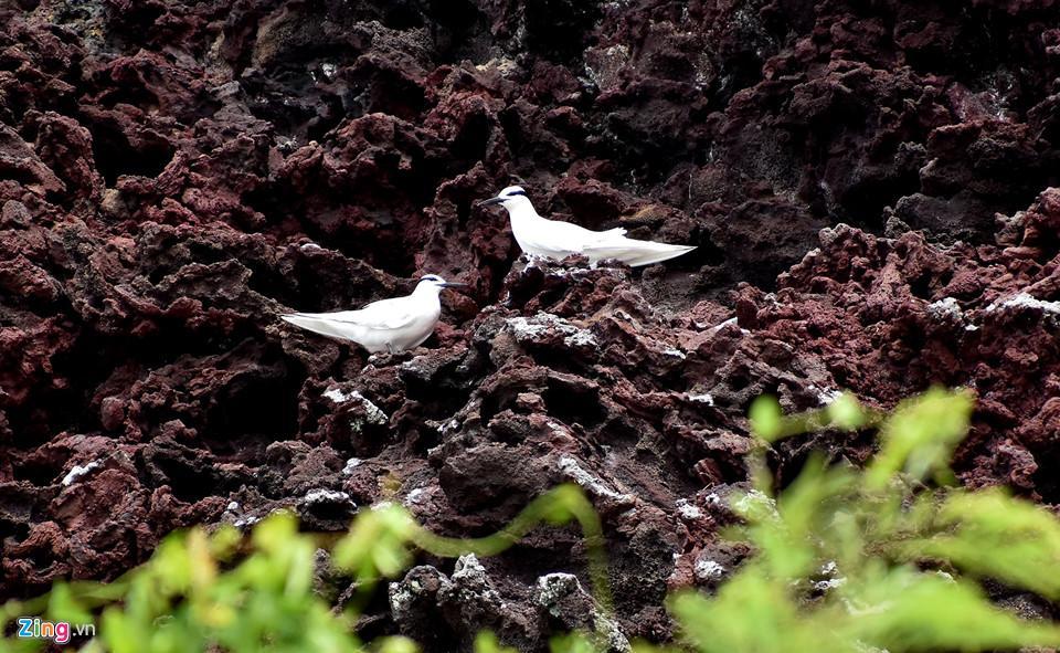 Ngắm miệng núi lửa trên đảo Lý Sơn từ fly cam-9