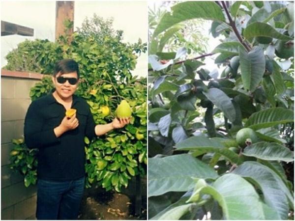 Khu vườn ngập cây trái Việt như nông dân thứ thiệt của Quang Lê ở Mỹ-1