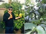 Khu vườn ngập cây trái Việt như nông dân thứ thiệt của Quang Lê ở Mỹ