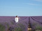 'Lịm tim' trước cánh đồng hoa oải hương đẹp không góc chết ở Pháp