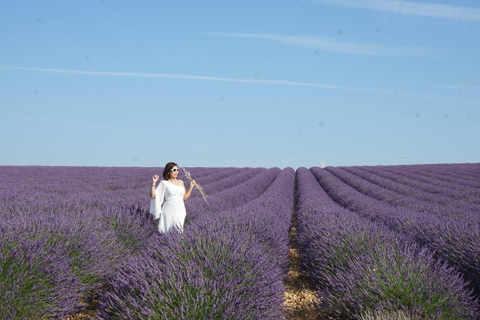 Lịm tim trước cánh đồng hoa oải hương đẹp không góc chết ở Pháp-3