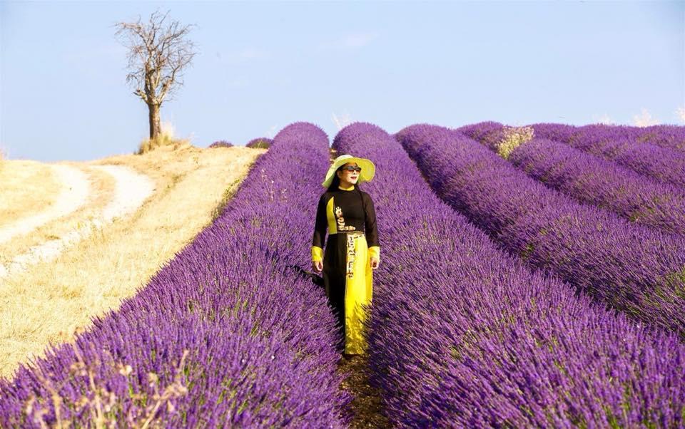 Lịm tim trước cánh đồng hoa oải hương đẹp không góc chết ở Pháp-4