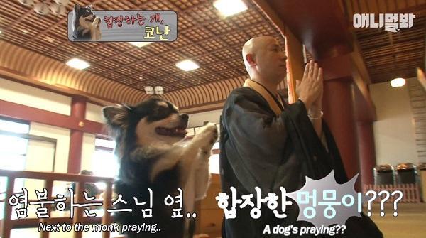 Chắp chân cầu nguyện trước tượng Phật mỗi ngày, chú chó Hàn Quốc nổi tiếng thế giới-1