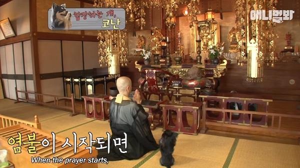 Chắp chân cầu nguyện trước tượng Phật mỗi ngày, chú chó Hàn Quốc nổi tiếng thế giới-2