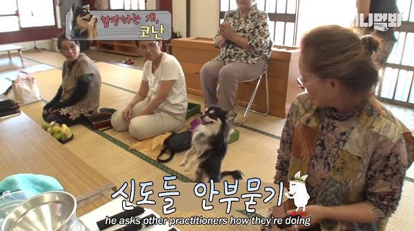 Chắp chân cầu nguyện trước tượng Phật mỗi ngày, chú chó Hàn Quốc nổi tiếng thế giới-3