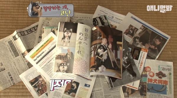 Chắp chân cầu nguyện trước tượng Phật mỗi ngày, chú chó Hàn Quốc nổi tiếng thế giới-4