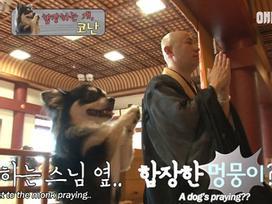 Chắp chân cầu nguyện trước tượng Phật mỗi ngày, chú chó Hàn Quốc nổi tiếng thế giới