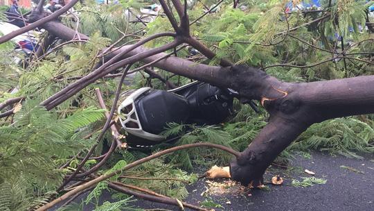 Gió quật ngã cây xanh ở Công trường Mê Linh, đè bị thương 2 người-1